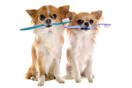 dog-grooming-dental
