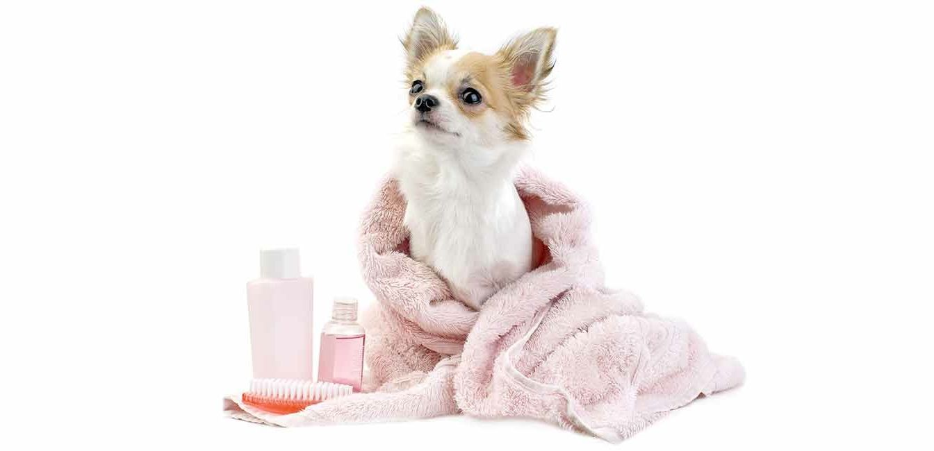 dog-groo-spa