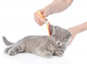 cat-being-groomed