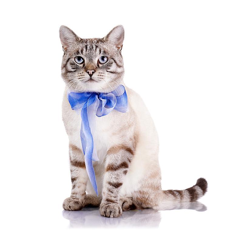 cat-goomint