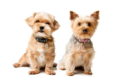 small-dog-dry-skin