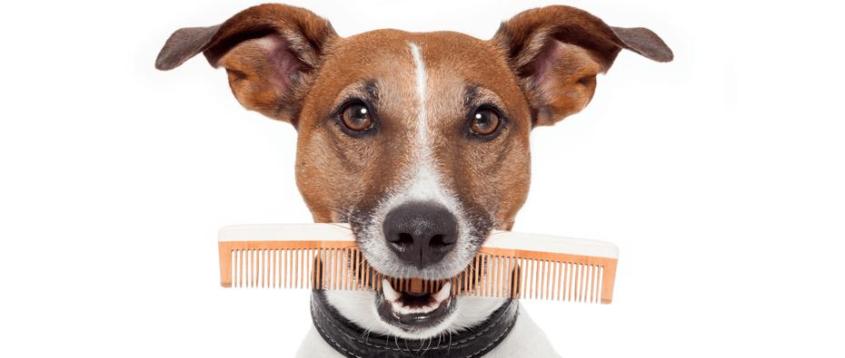 правильный тримминг собак
