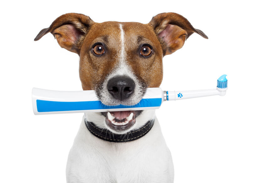 преимущества ультразвуковой чистки зубов собаке