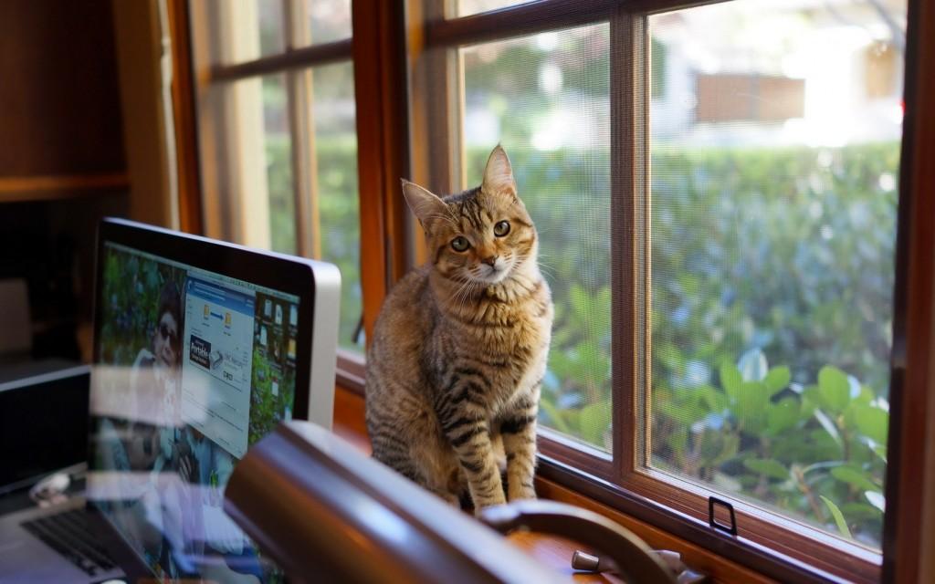 cat-feeder-6-1024x640