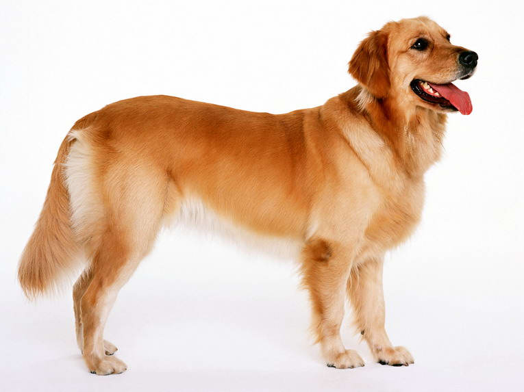 dog1_18